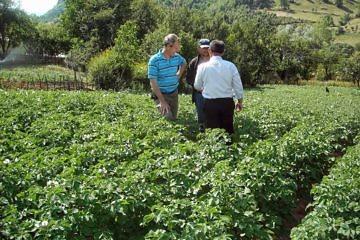 Seed potato project in Buzaishte
